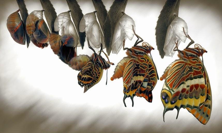 De geboorte van een vlinder